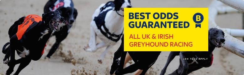 Greyhound Betting system