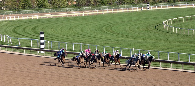 animal, horse, racing