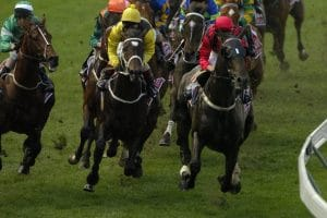 Lucky 15 bets on Horse Racing
