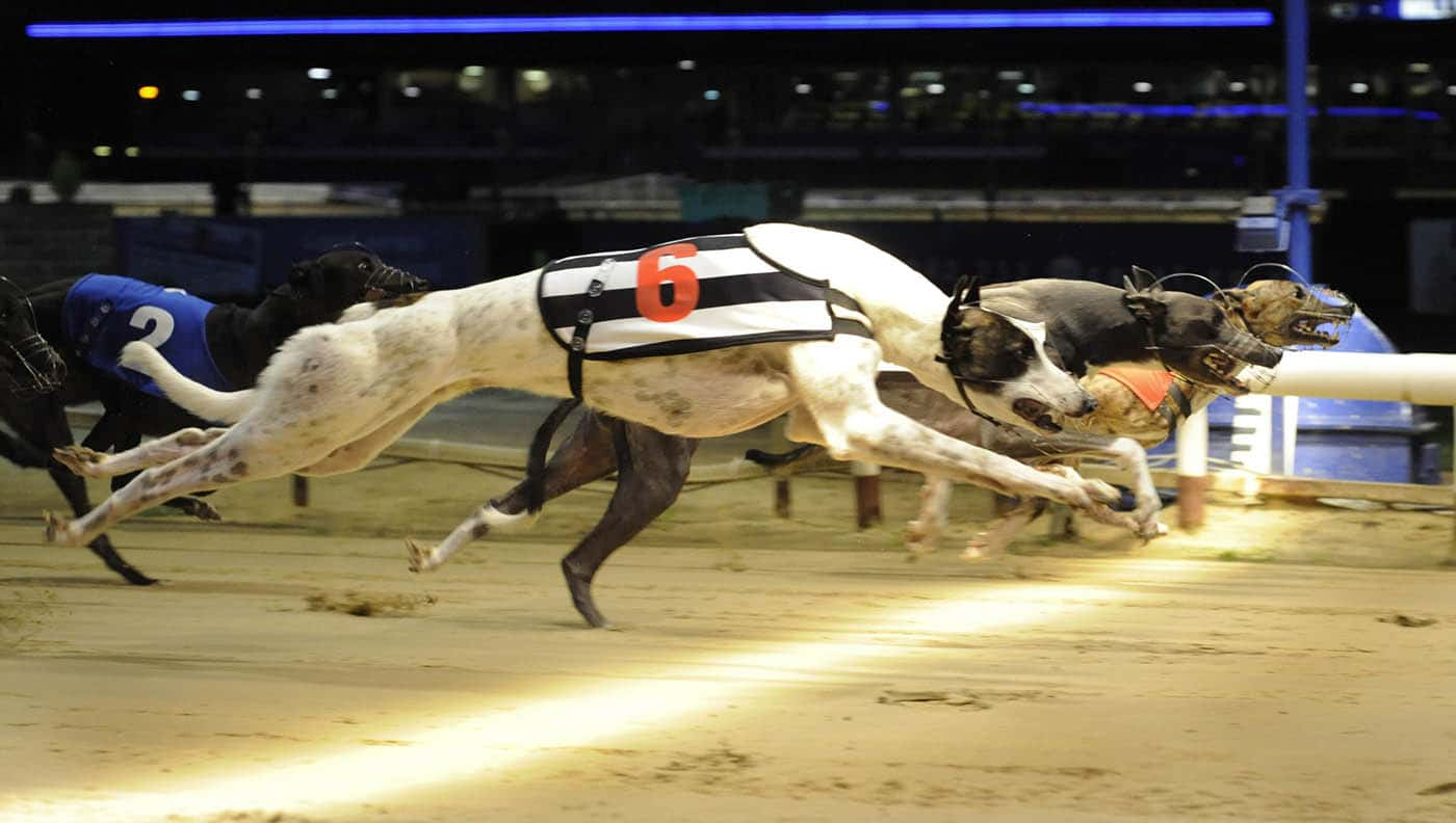 Best Greyhound Betting System