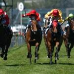 Horse Racing Betting Online