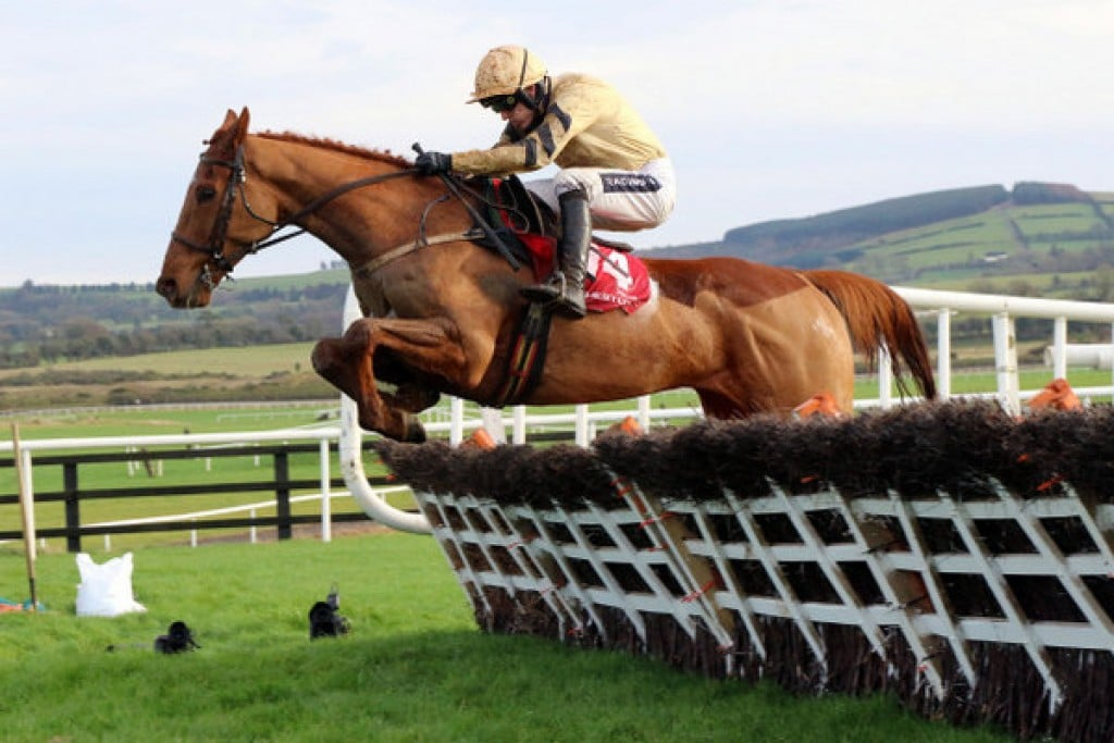 Yorkhill is third favourite in the Cheltenham Ante Post betting market
