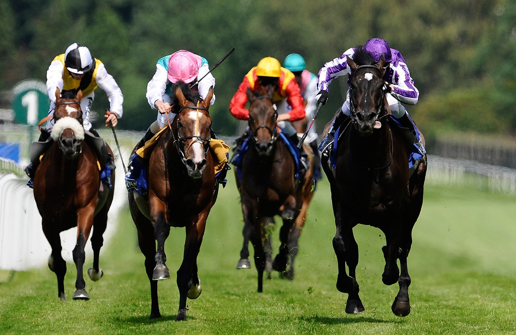 Horse Racing Slang