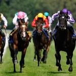 Horse-Racing-slang