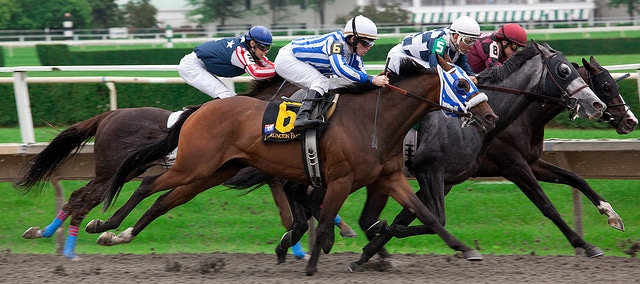 Tips for Horse Racing Dummies